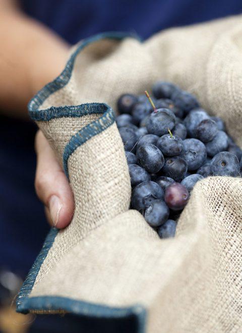 VistaDoro_9247 blueberries